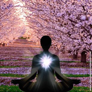 méditation Printemps